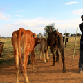 Agricultural households at municipality level: The case of Buffalo City vs. Mangaung